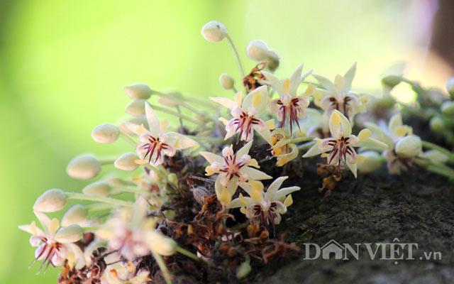 Ngỡ nghìng trước vườn lượng tỷ đô có hoa nở khắp cơ thể - 3