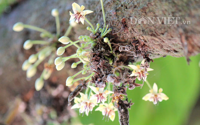Ngỡ nghìng trước vườn lượng tỷ đô có hoa nở khắp cơ thể - 4