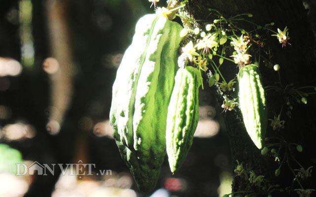 Ngỡ nghìng trước vườn lượng tỷ đô có hoa nở khắp cơ thể - 6