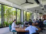 Văn phòng làm việc xanh mượt ở Đà Nẵng được báo tây ví  đẹp như resort