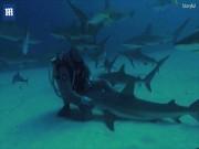 """Người biết """"làm phép"""" khiến cá mập hung dữ bỗng ngoan như cún"""
