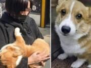 Cô gái TQ bắt cóc chó, ném từ tầng 6 xuống đất