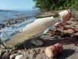 Dọn rác bờ biển, cậu bé Anh nhặt được tin nhắn thú vị từ châu lục khác