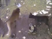 """Chết cười với những chú khỉ  """" lầy lội """""""