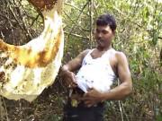 Người đàn ông ong đốt không biết đau, từng bị 300 con ong đốt