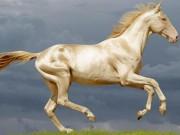 """TQ: Bỏ 300 triệu USD mua ngựa quý huyền thoại  """" mồ hôi như máu """""""