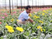 Chăm hoa bán Tết: Trồng 30.000 cây đồng tiền có liền 15 triệu/tháng