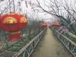 Vườn đào Nhật Tân nở sớm, giới trẻ thích thú check-in