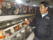 Làm giàu ở nông thôn: Nuôi gà siêu đẻ, mỗi năm lãi nửa tỷ đồng