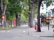 Ảnh: Trước và sau khi  trảm  hàng cây 100 tuổi tại con đường đẹp nhất SG