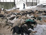 Nga tung biệt đội  tử thần  càn quét 2 triệu chó hoang