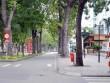 """Ảnh: Trước và sau khi """"trảm"""" hàng cây 100 tuổi tại con đường đẹp nhất SG"""