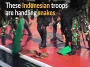 Xem lính Indonesia cắt đầu, uống máu hổ mang trước mặt Bộ trưởng QP Mỹ