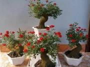 Thị trường - Tiêu dùng - Độc, lạ hoa hồng giả cổ giá 1 triệu đồng/cây cháy hàng dịp Tết