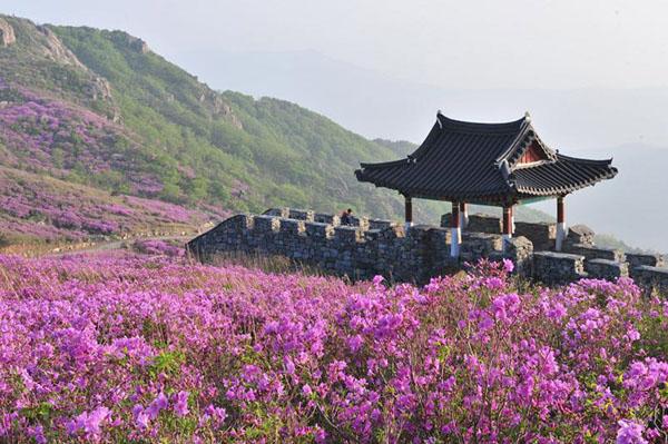 Tất tần tật những điểm ăn chơi thú vị tại quê hương HLV Park Hang-seo - 7