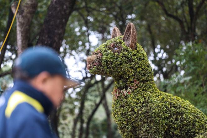 """HN: Nhiều """"con vật"""" khổng lồ bất ngờ xuất hiện khiến người dân thích thú - 5"""