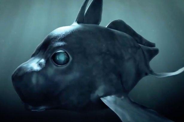 """Lần đầu quay được cá mập ma có """"mắt thần"""" nhìn xuyên màn đêm - 2"""