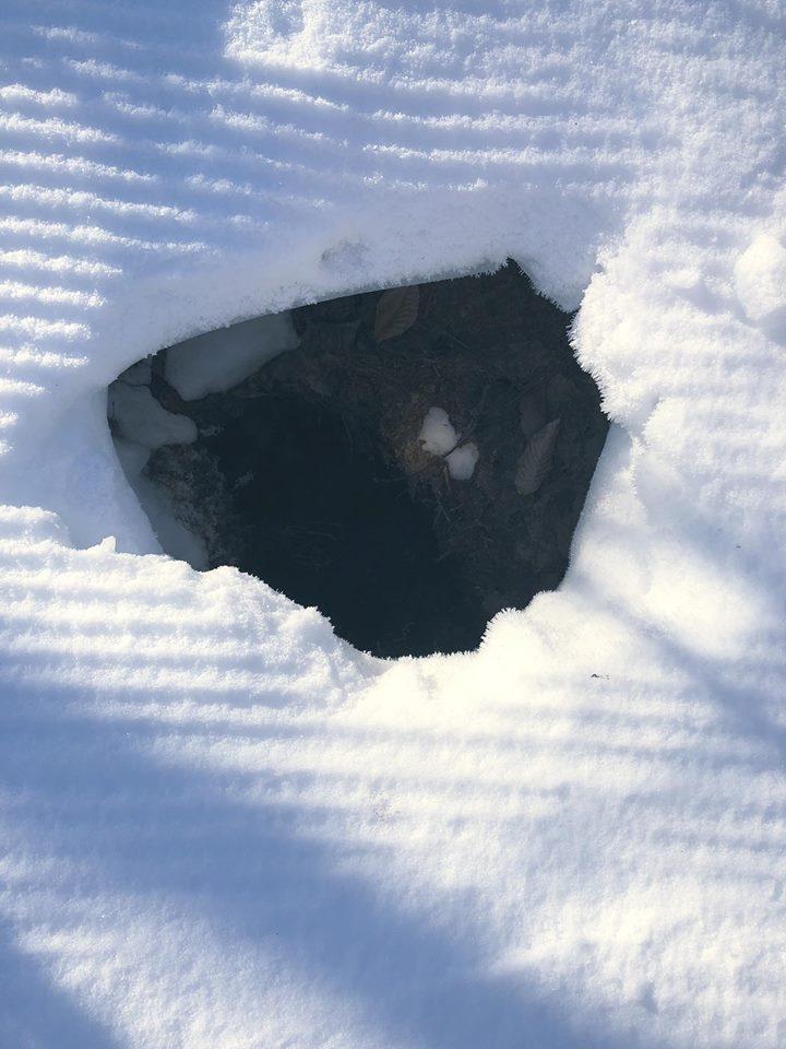 Mỹ: Thấy hố tuyết kỳ lạ, phát hiện điều thú vị bên trong - 1