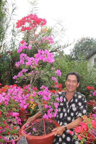 """Mãn nhãn ngắm vườn hoa giấy """"6 trong 1"""" chưng Tết trên đất Tây Đô - 3"""