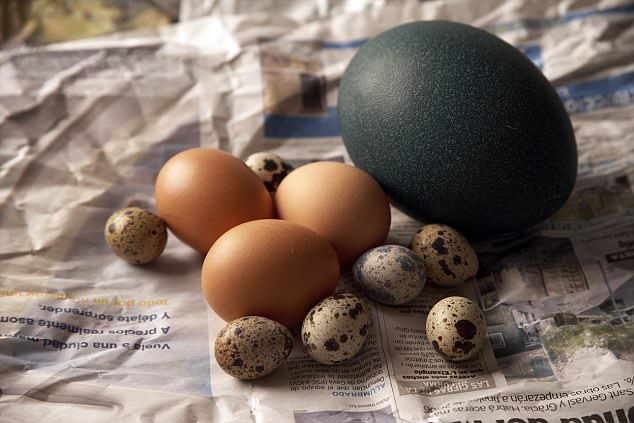 Quả trứng kỳ lạ thu hút 13 triệu lượt xem trên Instagram - 4