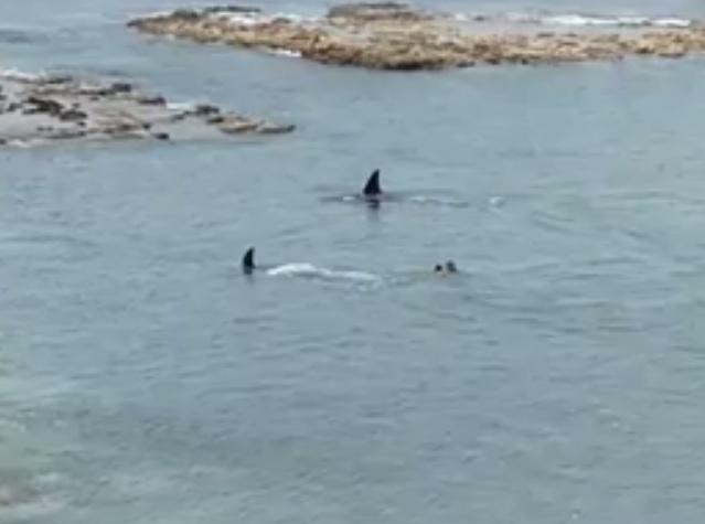 Sợ điếng người cảnh 2 cá voi sát thủ 6 tấn lao về phía cậu bé đang bơi - 1