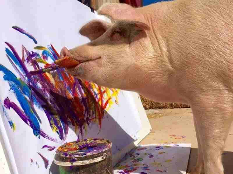 Choáng với bức tranh trị giá ngàn đô của 1 nàng... lợn - 1