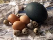 Quả trứng kỳ lạ thu hút 13 triệu lượt xem trên Instagram