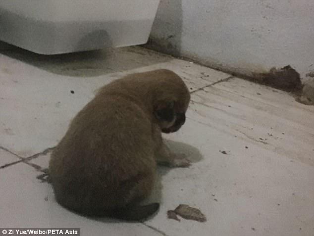 Vườn thú TQ để trăn khổng lồ ăn thịt chó con trước mặt khách - 2