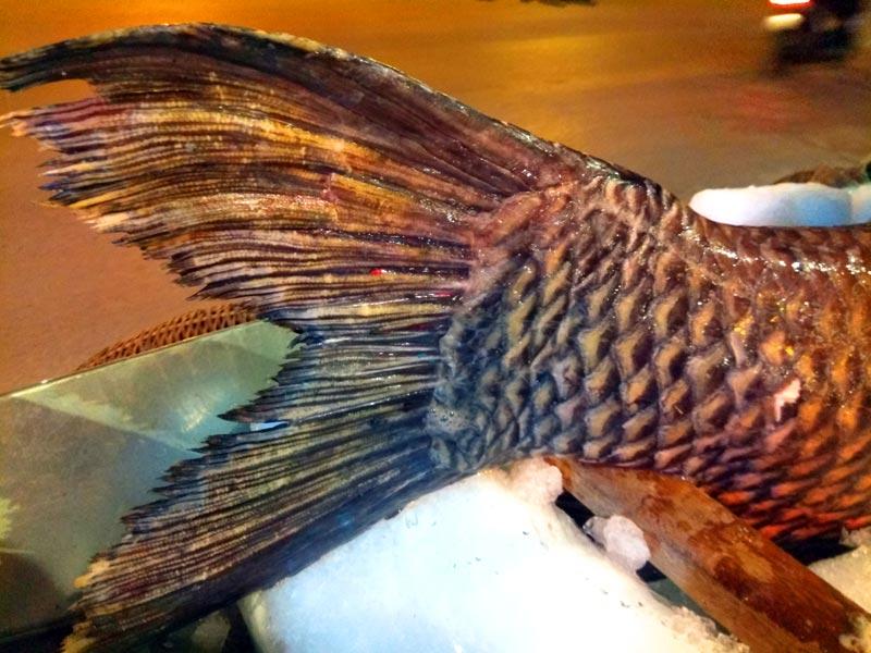 """Chi cả trăm triệu, """"rước"""" cá hô khủng từ Campuchia về Hà Nội ăn Tết - 5"""