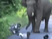 Video: Lái xe máy bị voi đuổi chạy thục mạng