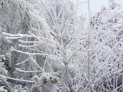 Miền Bắc rét khủng khiếp, băng giá xuất hiện diện rộng