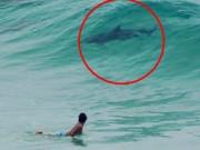 Chuyện lạ - Sinh vật bí ẩn thân cá heo, đuôi cá mập ở bãi biển Úc