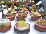 Gần 5 triệu đồng 1 chậu nấm linh chi bonsai chơi Tết ở Thủ đô
