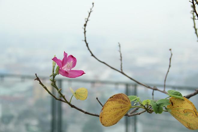 Nam Bộ nhiều nơi 15 độ, Sài Gòn se lạnh ngày giáp Tết - 1