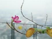 Tin tức trong ngày - Nam Bộ nhiều nơi 15 độ, Sài Gòn se lạnh ngày giáp Tết