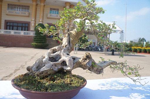 """La liệt bonsai độc địa bằng ví hết lượng vàng """"đại náo"""" thị trường Tết 2018 - 2"""