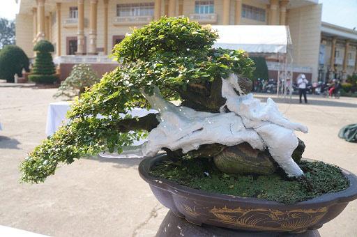 """La liệt bonsai độc địa bằng ví hết lượng vàng """"đại náo"""" thị trường Tết 2018 - 3"""