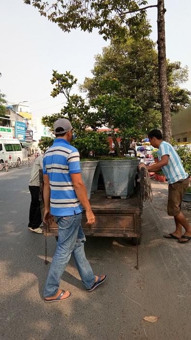 """Mãn nhãn hoa giấy Mỹ dáng """"quái vật"""" giá 40 triệu/cây đổ bộ Sài Gòn - 7"""