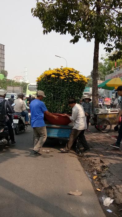 """Mãn nhãn hoa giấy Mỹ dáng """"quái vật"""" giá 40 triệu/cây đổ bộ Sài Gòn - 8"""
