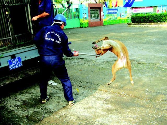 """Biệt đội """"săn"""" chó thả rông ở Sài thành - 14"""