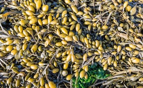 Snack khoai tây mắc nhất TG: Gần 300.000 bầyng cho 1 khoảnh mỏng như tờ giấy - 4