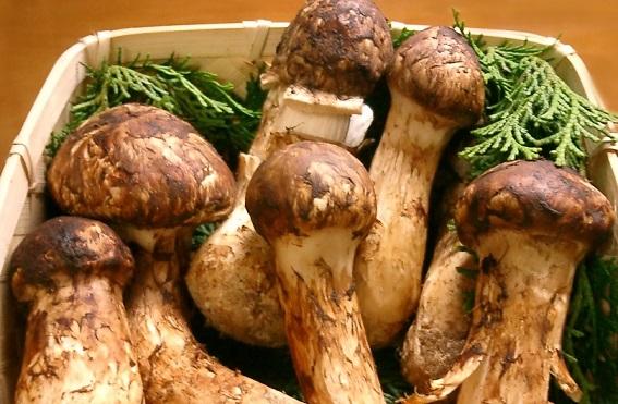 Snack khoai tây mắc nhất TG: Gần 300.000 bầyng cho 1 khoảnh mỏng như tờ giấy - 3