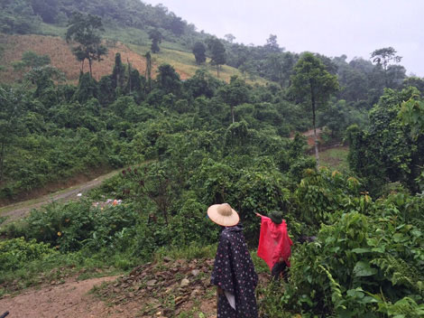 Kinh thiên những vụ thảm án đồng rừng và chiếc lồng gà đón sóng - 1