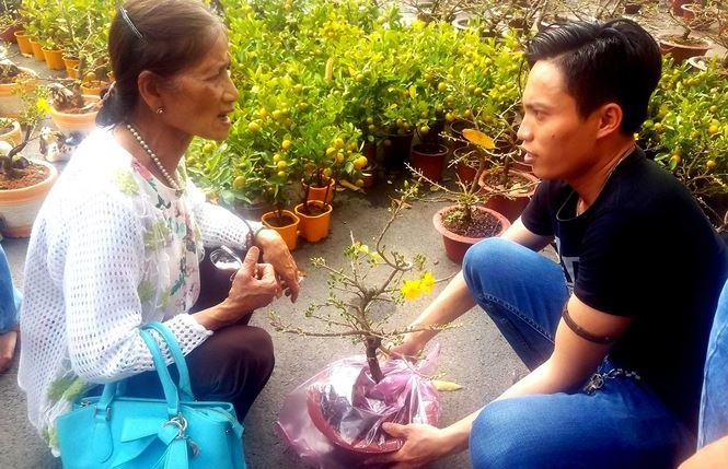 """Mai bonsai """"tí hon"""" chơi Tết hút khách ở Sài Gòn - 15"""