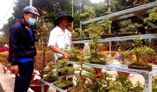 """Mai bonsai """"tí hon"""" chơi Tết hút khách ở Sài Gòn - 16"""