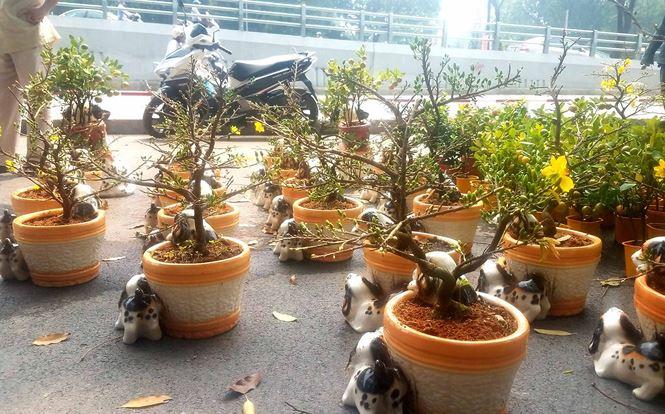 """Mai bonsai """"tí hon"""" chơi Tết hút khách ở Sài Gòn - 2"""