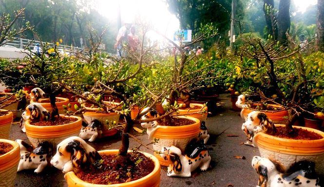 """Mai bonsai """"tí hon"""" chơi Tết hút khách ở Sài Gòn - 4"""