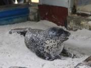 Tin tức trong ngày - Kỳ công nuôi chó biển ở Nha Trang