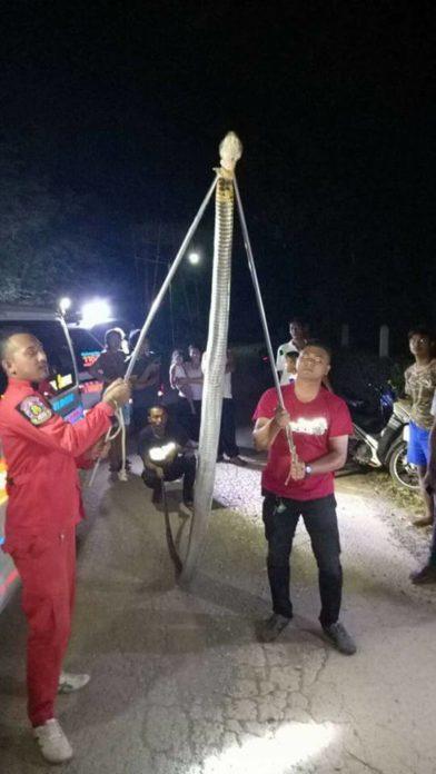 Thái Lan: Kinh hãi hổ mang chúa khổng lồ 5 mét mò vào nhà dân - 2