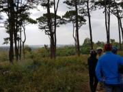Phát hiện nam thanh niên chết bất thường trong rừng thông